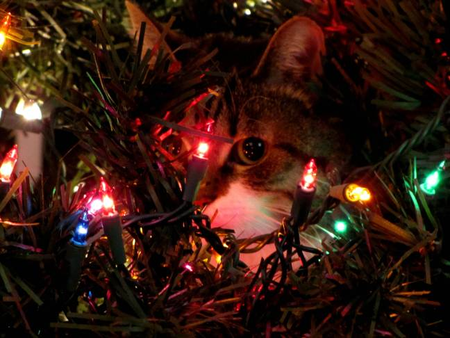 Holiday Hiding